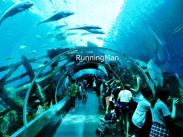 Sentosa Marine Life Park 04