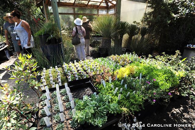 succulents at Cistus