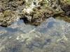 波左間海水浴場付近のウニ
