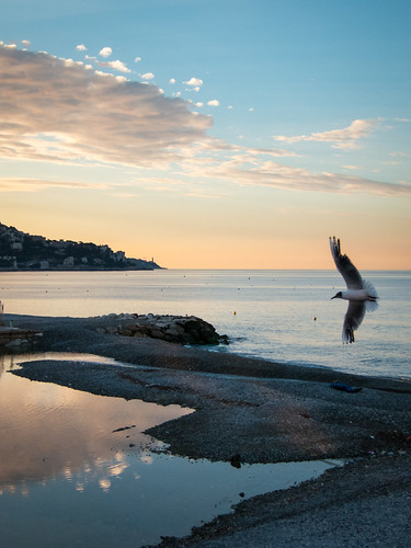 pink blue sky orange france color bird water clouds sunrise landscape dawn flying nice mediterranean cotedazur seagull horizon frenchriviera