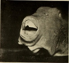 """Image from page 45 of """"Zoological Society bulletin"""" (1901)"""