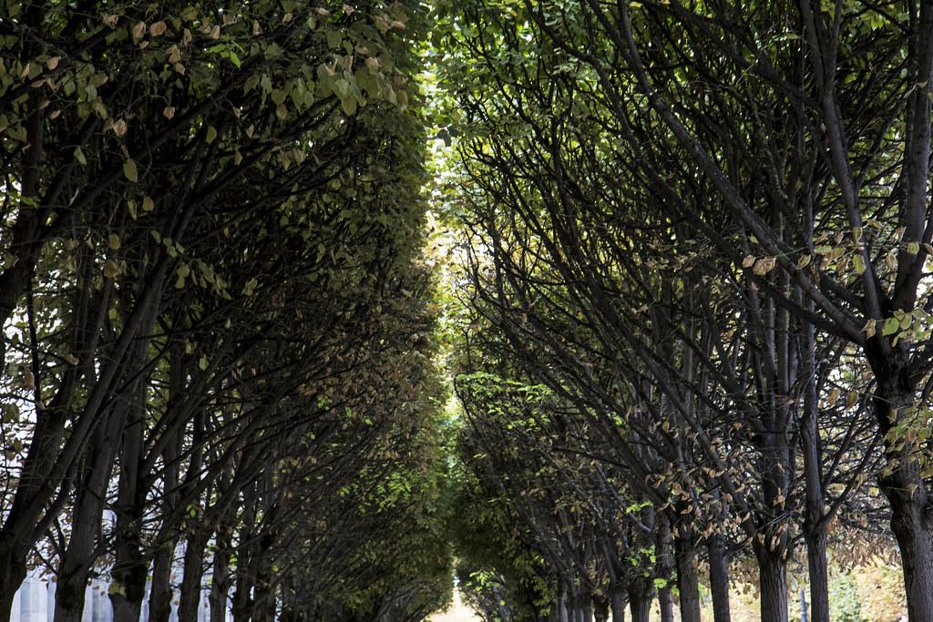 Paris-details5