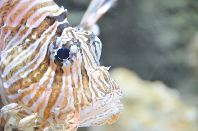 03_Georgia Aquarium