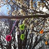 Spring. Watson Shops. #nofilter #cbr #yarnbombing #trees  #spring