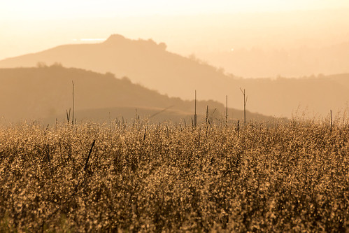california sun grass canon landscape golden bokeh socal orangecounty dslr sl1 chinohills