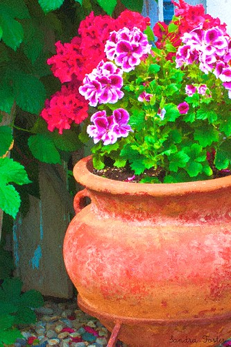 Martha Washington Geraniums Potted - Digital Oil