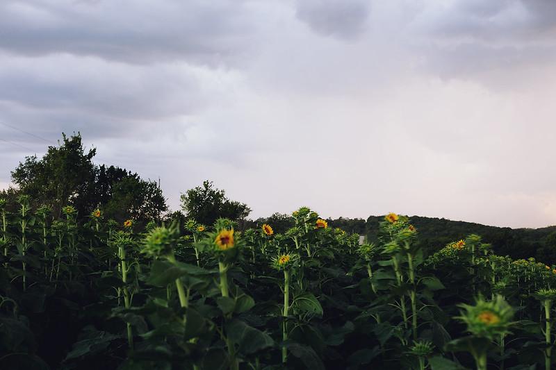 Kisiel-2014-08-29-0004