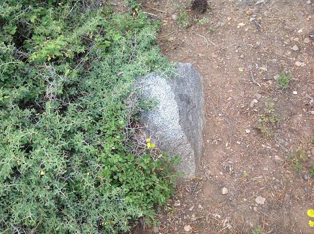 View of Sierra Nevadas8