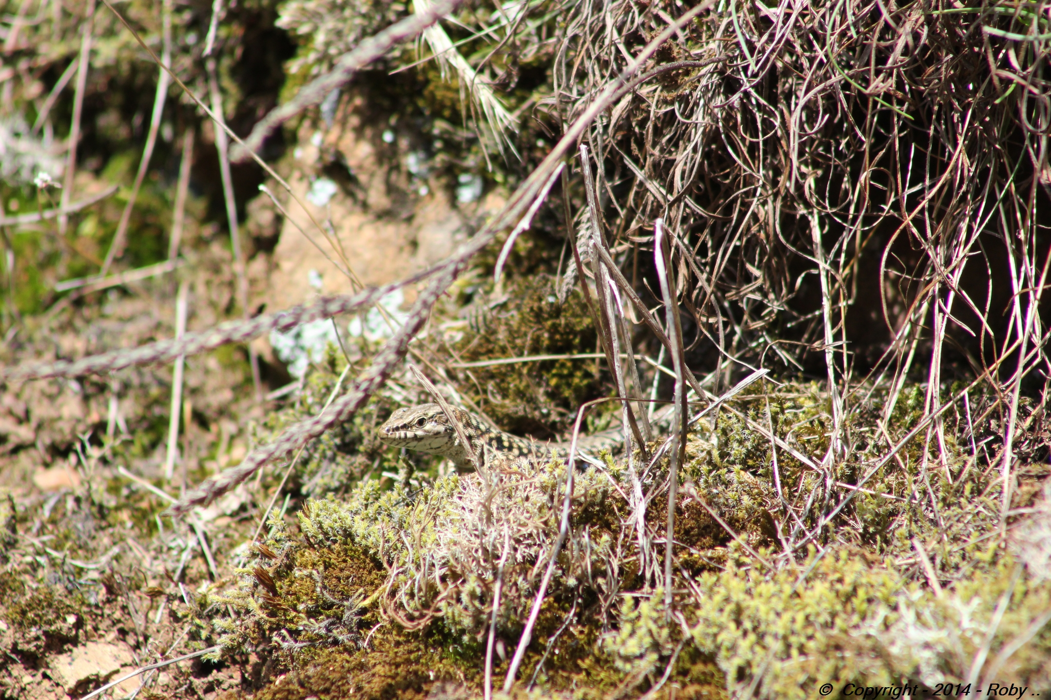 vallee de l'argenton 2 (8)