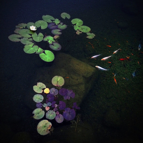 Twilight in the Koi Pond