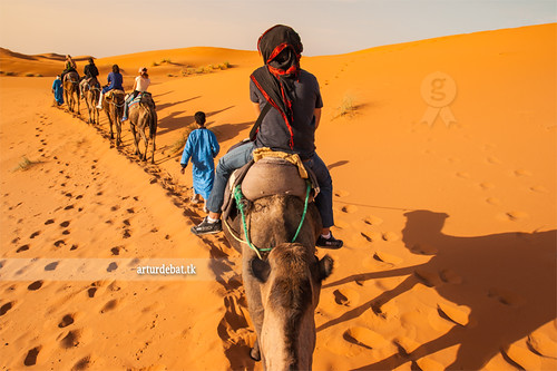 "africa trip travel shadow beauty animal wow landscape amazing nice interesting holidays tour ride desert superb dunes awesome great tracks row adventure route riding camel morocco berber maroc stunning viatge marruecos vacations impressive gettyimages ergchebbi arturii arturdebattk ""canonoes6d"" firstpersonviewsand"