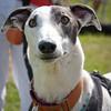 140525 Greyhound Extravaganza-0136