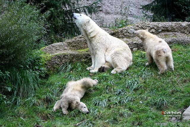 EisbärenGiovanna Nela&Nobby 2014_09_17 345