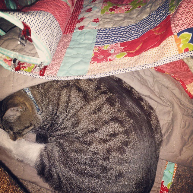 Cat approved quilt.  I had to stop binding as I couldn't move the quilt anymore.  Super helpful cat. #misskate