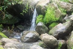 Kuchidna Springs
