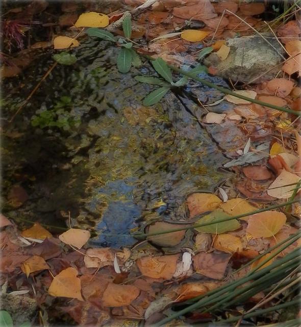 Hojas del arroyo