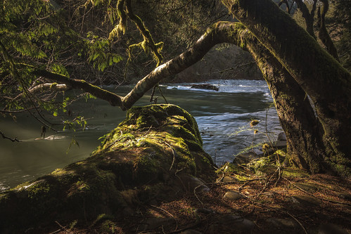 writingwithlight trees lewisriver rocks volcanicrocks landscape richborder sonya77 washingtonstate moss sigma1020mmlens