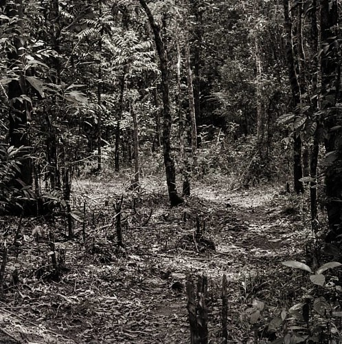 into the: woods #kalipety  #guarani  #brazil  #bnw  #nature  #abstract  #landscape