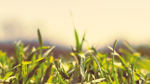 sky macro grass spring