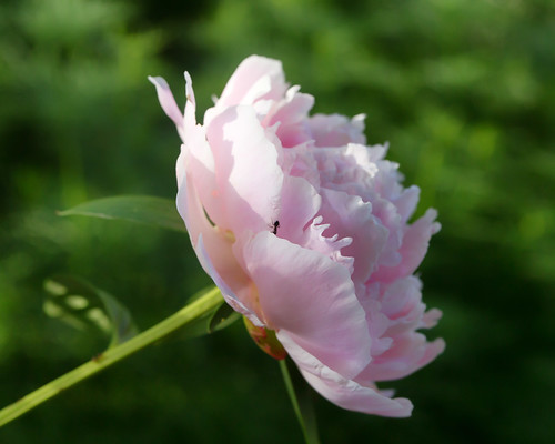 06-14 flowers-3382-Edit