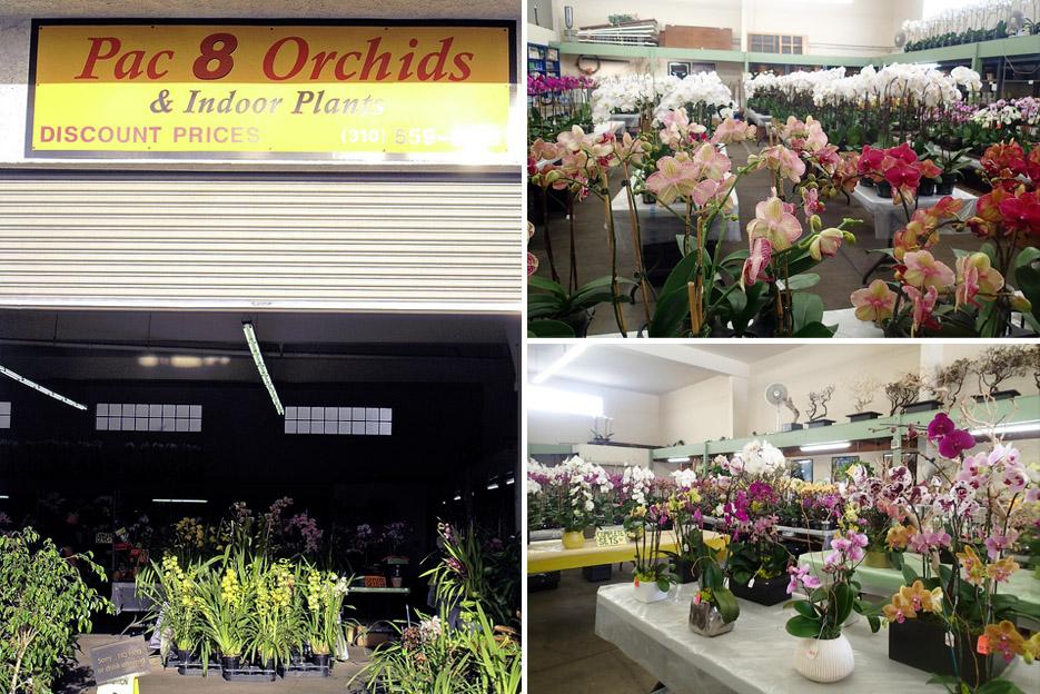 051314_orchids01