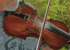 bowed string instrument, string instrument, violin, viol, viola, fiddle, string instrument,
