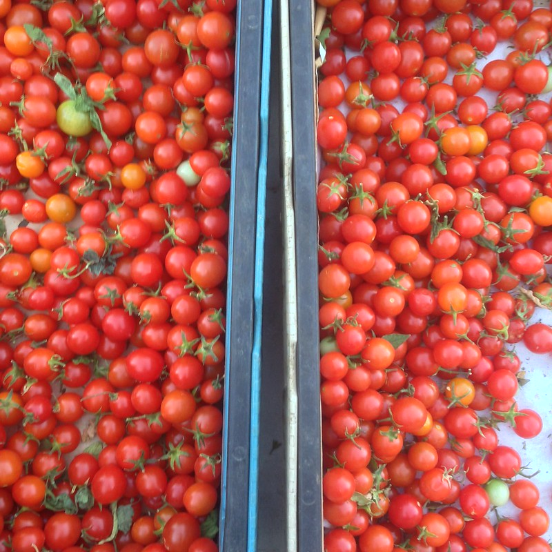 tomato, tomahto