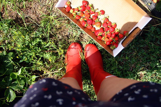 Strawberries-by-feet