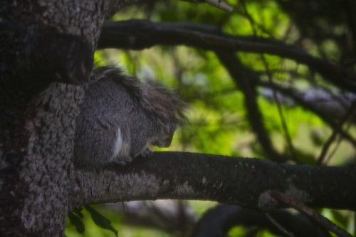 a sleeping squirrel