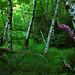 foxglove grove