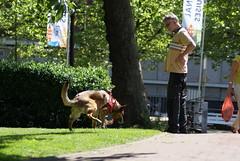 Man laat hond uit in het Weteringsplantsoen