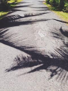 Caminos en sombras...