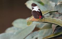 2.Bild Schmetterling