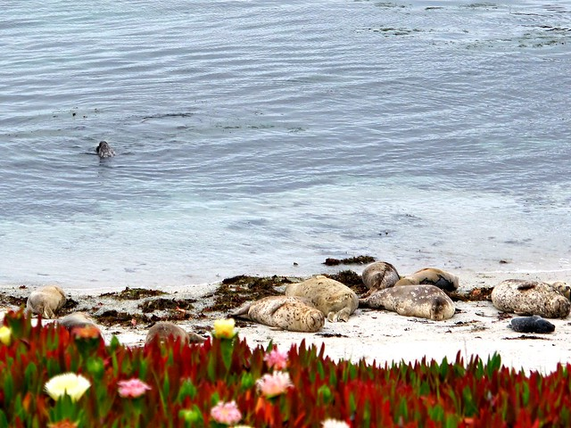 30 Things to Do in the Monterey Bay Area | This Is My Happiness