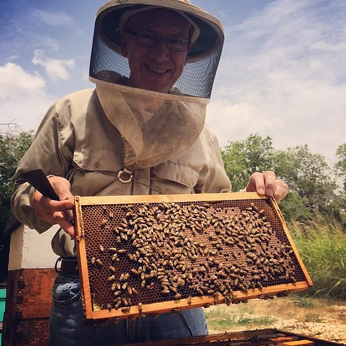 The queen in this hive is going to town. We'll likely be able to split this one. #bees #beekeeper #beekeeping