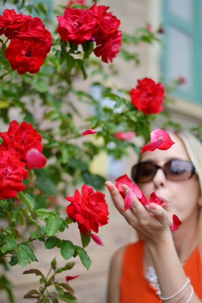 Like roses (11)