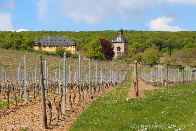 Rheingau Wine Region Germany-35