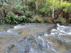 2014-08-10 Lilydale Falls 109 - Second River above upper falls