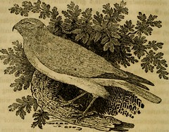 """Image from page 77 of """"A history of British birds : the figures engraved on wood"""" (1809)"""