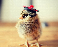 Top-10-Baby-Chicks-in-Hats-9