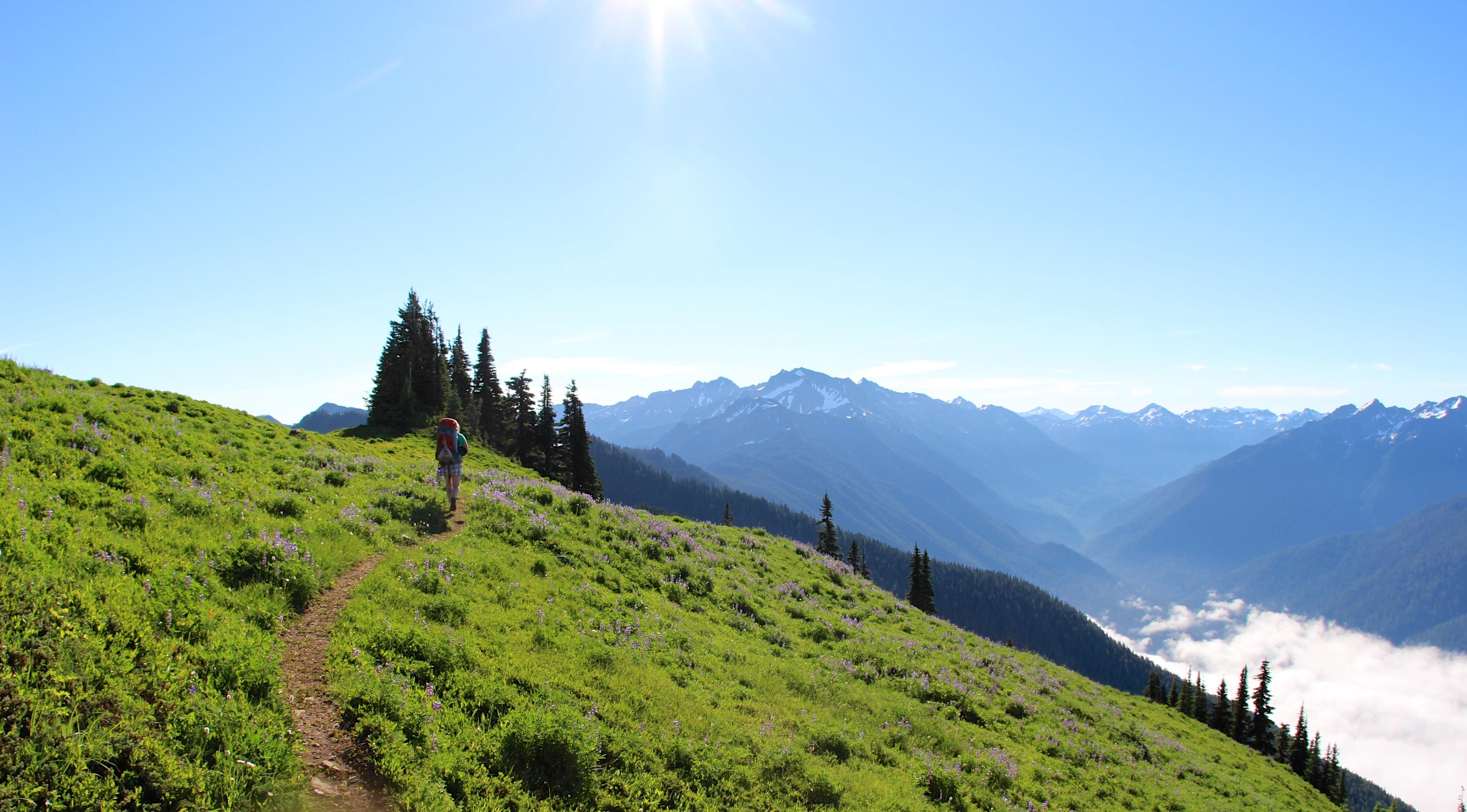Elevation Of Mount Olympus West Peak Washington Usa