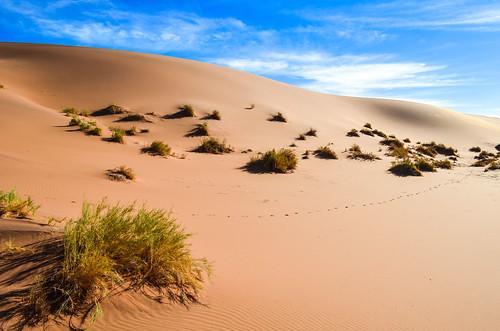 Hidden Vlei, Sossusvlei, Namibia