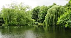 Pond by Broad Oak 4