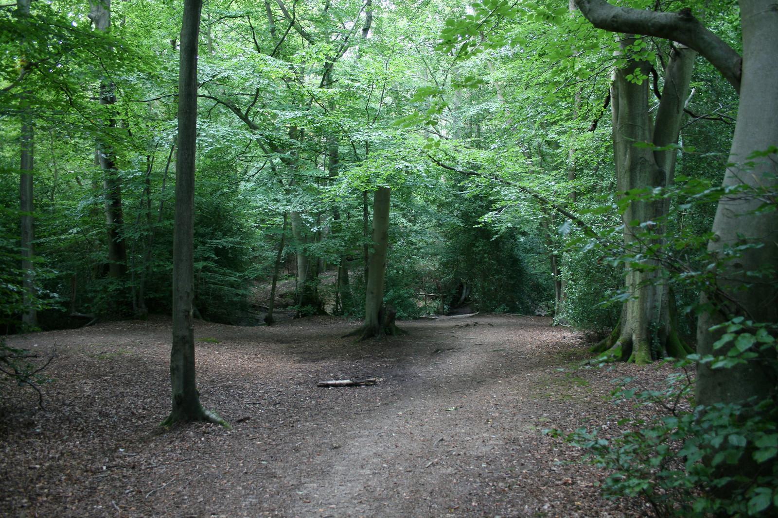 Frillinghurst Wood