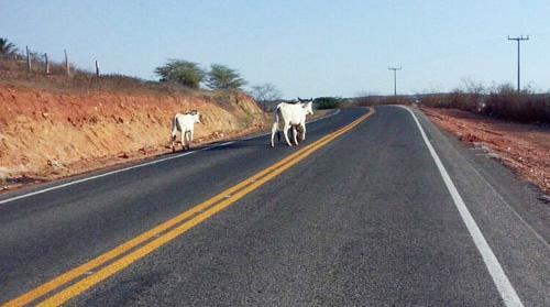 BA–623: Animais continuam oferecendo riscos aos motoristas