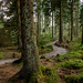 2014 - 08 - 17 - EOS 600D - Nercwys Forest - 011 by s wainwright
