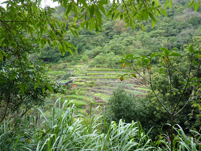 20140216陽峰古道、陽明公園、大屯瀑布 (1)