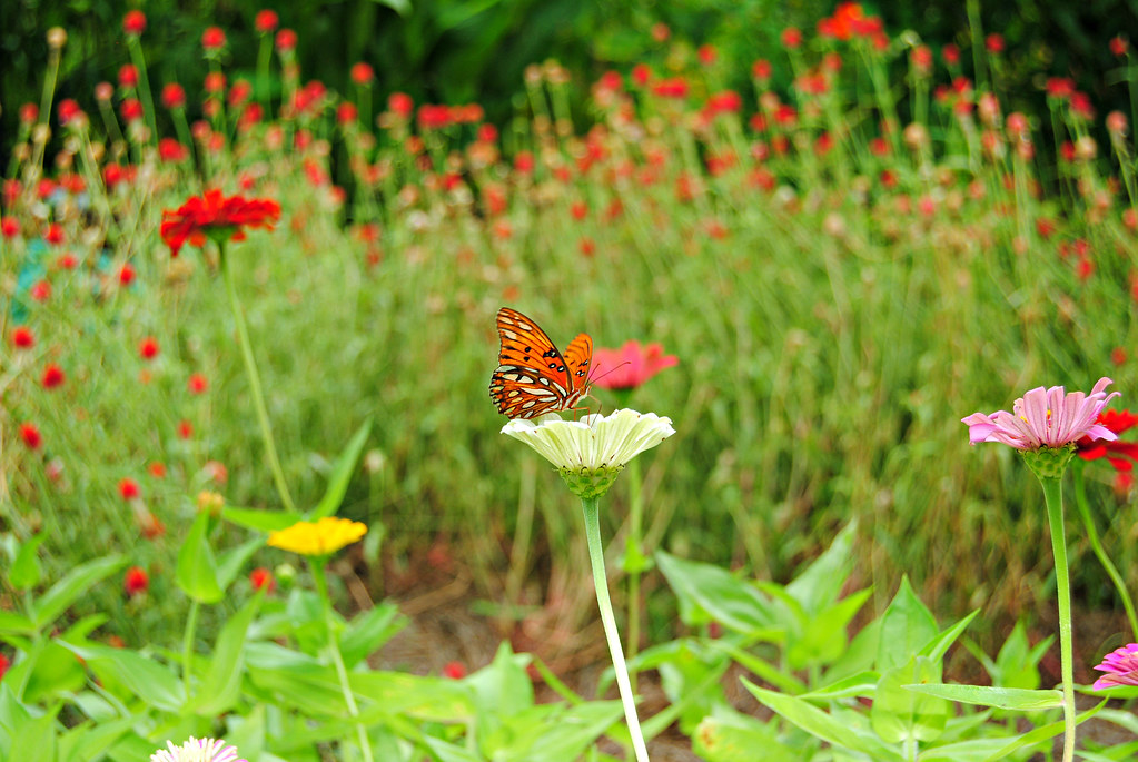 Boone Hall gardens_butterfly