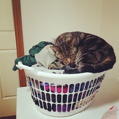 Lucky for Mal, this is dirty laundry so I haven't kicked him off #catsofinstagram