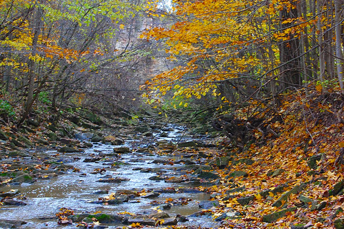 autumn nature water leaves river creeks